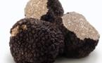 Pourquoi la truffe est un produit addictif
